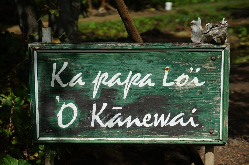 IkeHawaii01